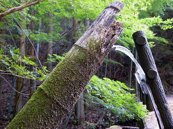苔をむした竹