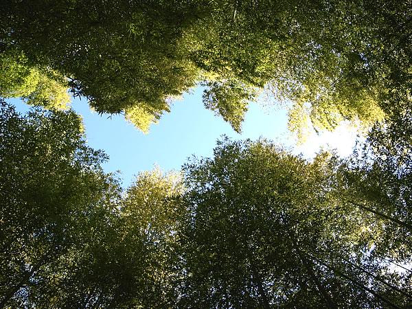 天をさす竹