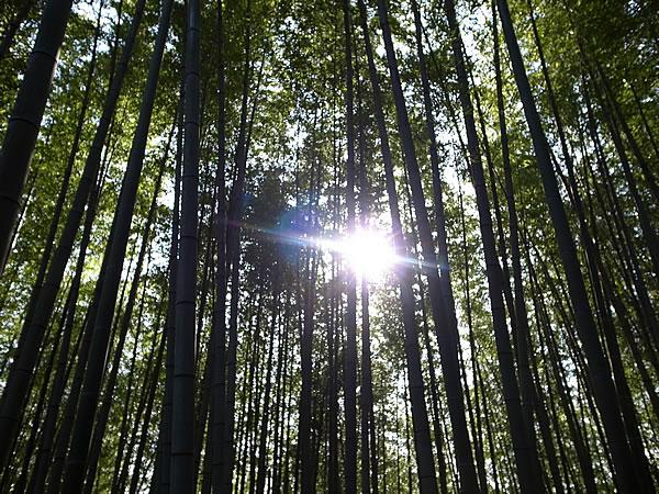竹林の太陽
