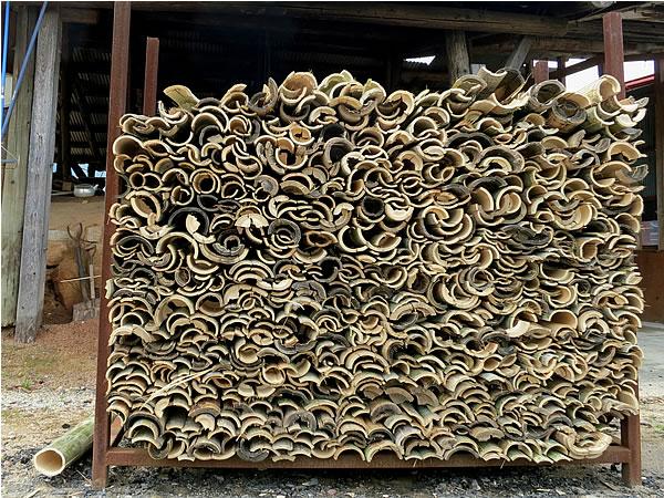竹炭用の竹