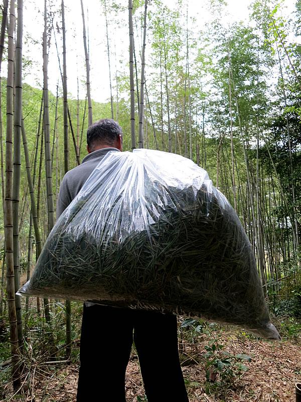 虎竹茶摘み