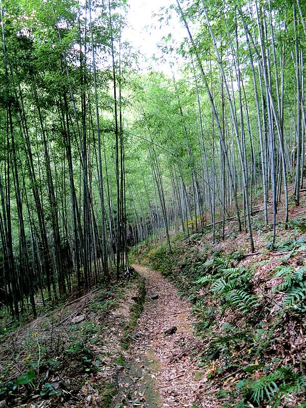 日本唯一虎竹の山道