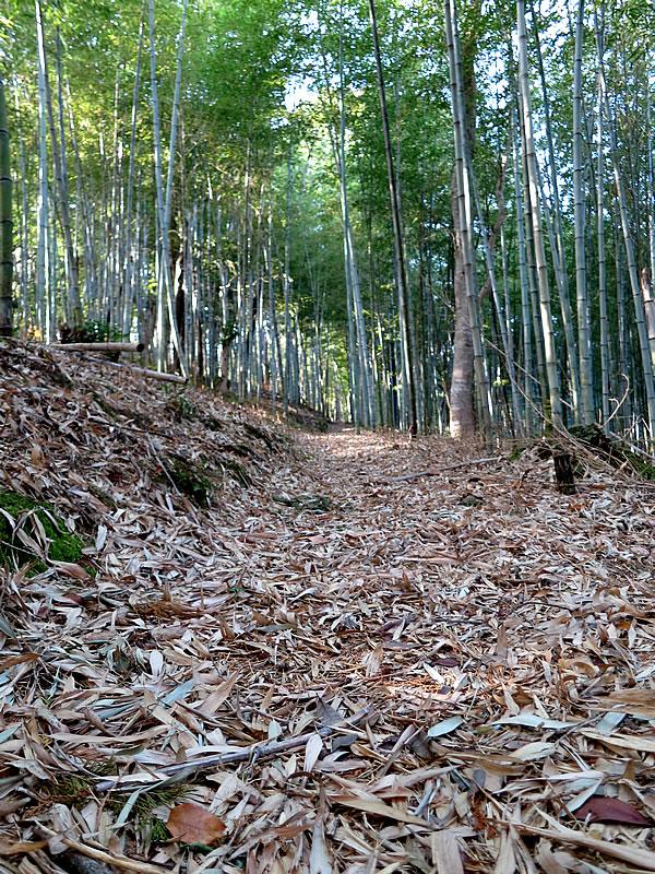 虎竹葉の道