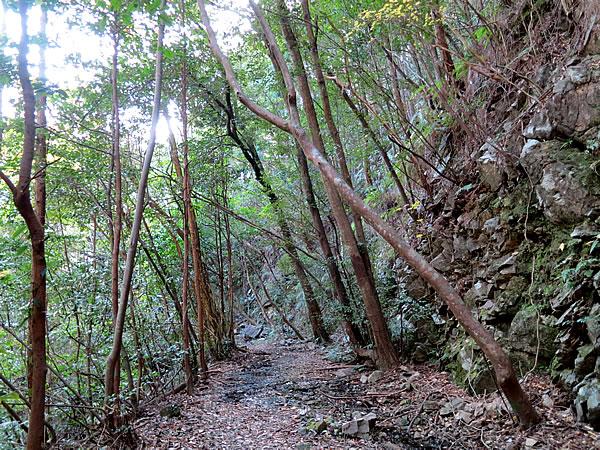焼坂の山道