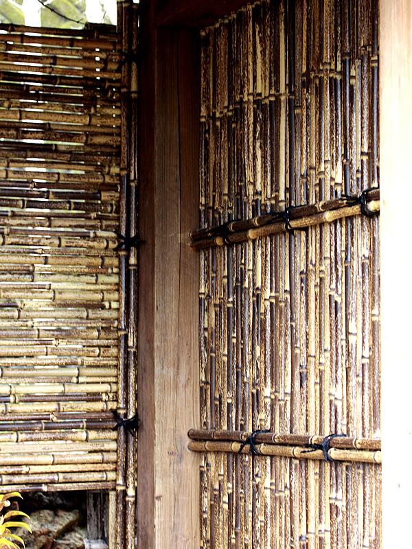 日本唯一虎斑竹