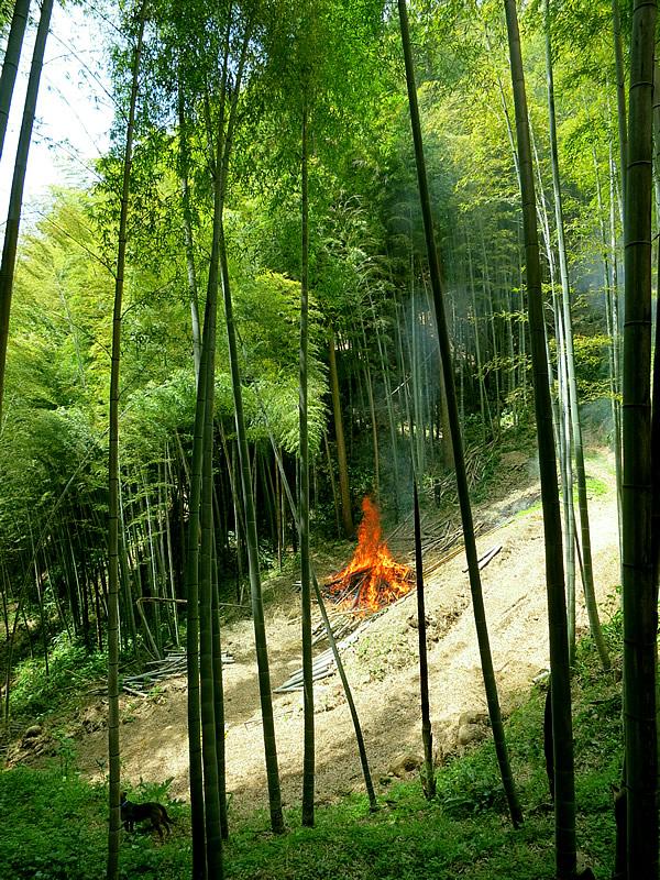 竹林でのポーラス竹炭焼き