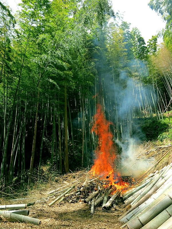 竹林の中の炎