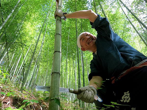 日本唯一虎竹林