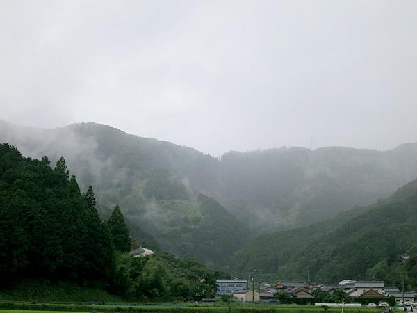 嵐の虎竹の里