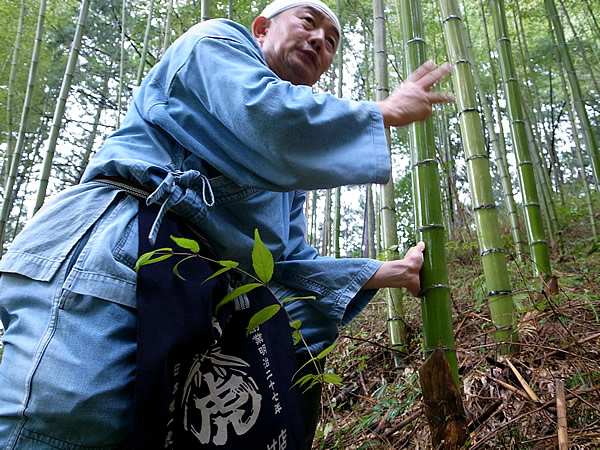 日本唯一虎竹の里にて竹虎四代目