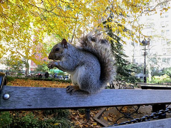 ワシントンスクエア公園のリス