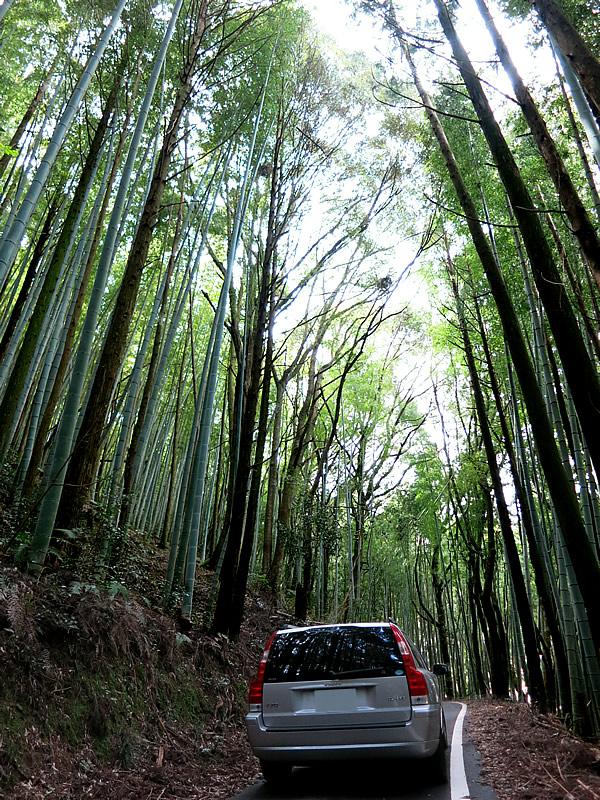竹とボルボ