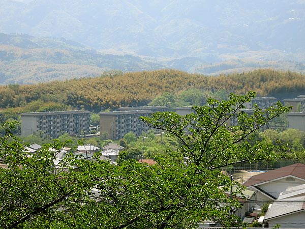 洛西竹林公園より竹の秋を眺める