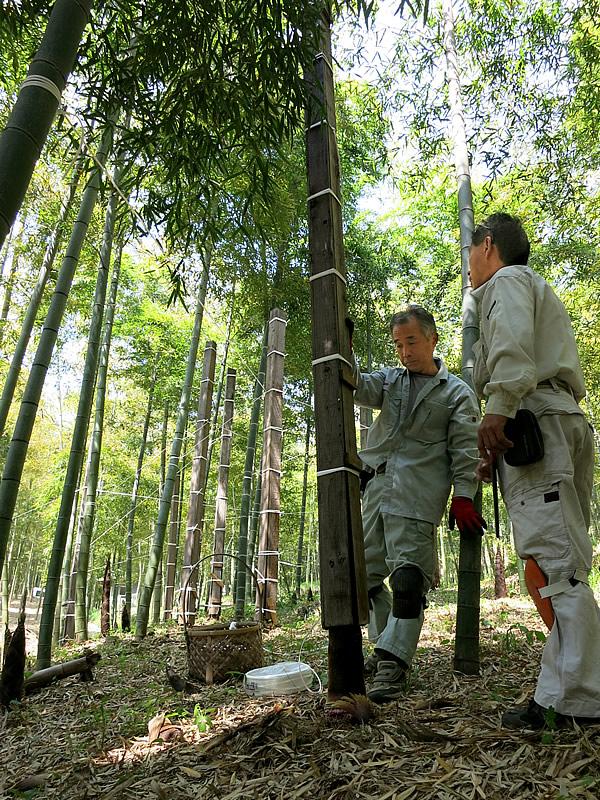 京都の角竹作り