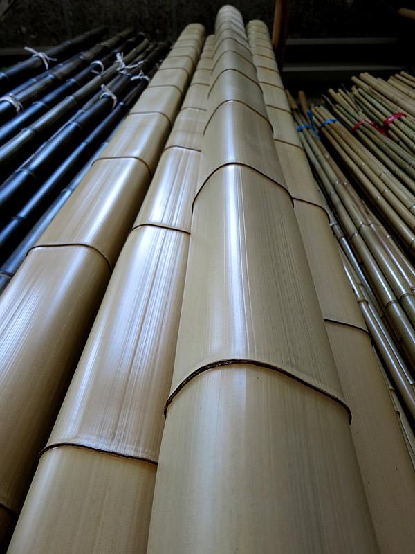 美しい角竹