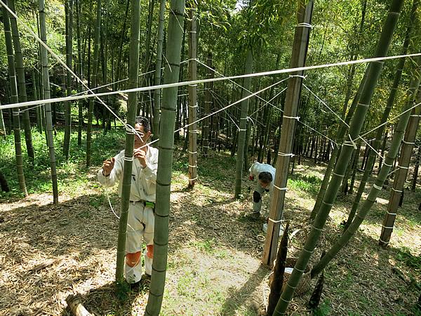 角竹作り竹林での作業