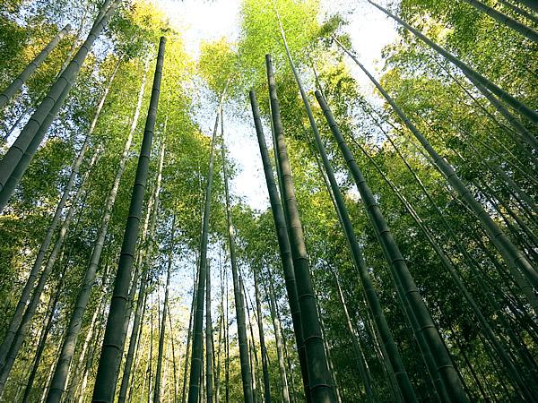 胡麻竹の作り方