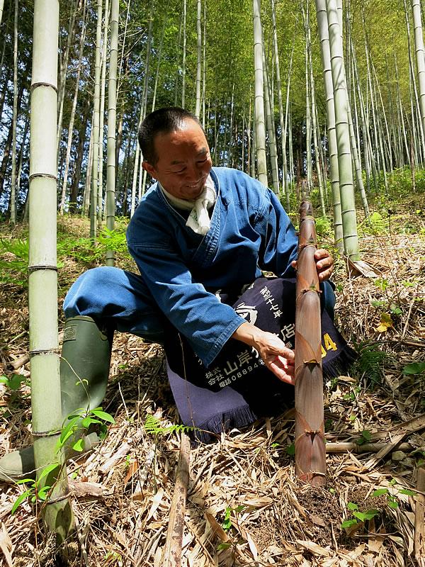 虎竹の里の筍