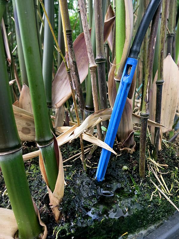 竹への自動給水