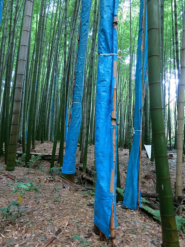 図面竹の養生