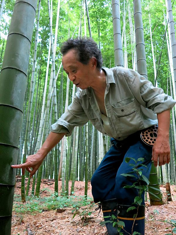 京都の銘竹