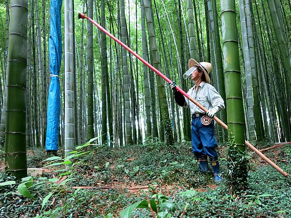 図面竹薬剤塗布作業