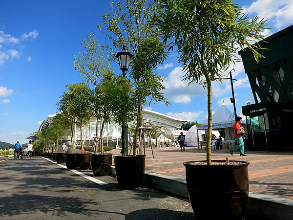 世界竹博覧会(World Bamboo Fair)竹鉢植え