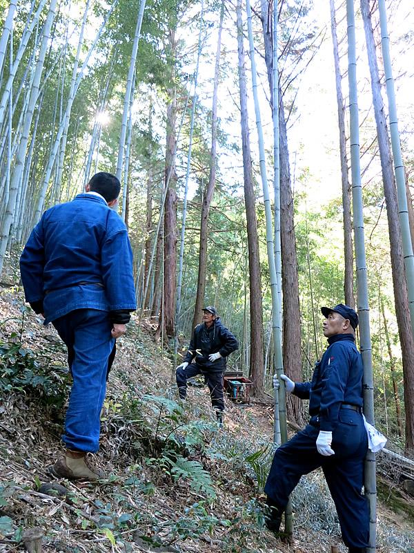 日本唯一の虎竹林でヒロタリアンさん、竹虎四代目(YOSHIHIRO YAMAGISHI)