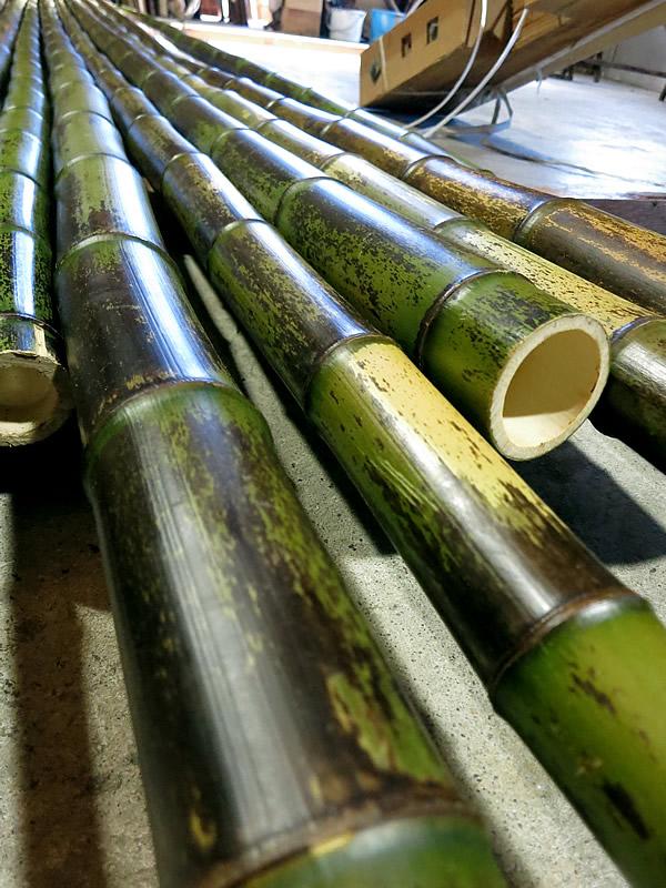 拭き上げた虎竹 Tiger Bamboo