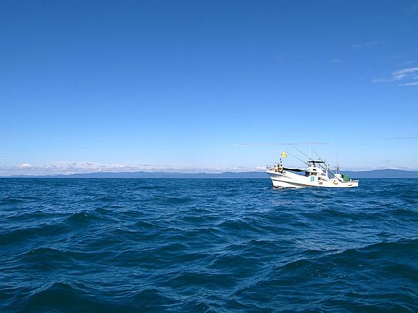 鯨体験、ホエールウォッチング