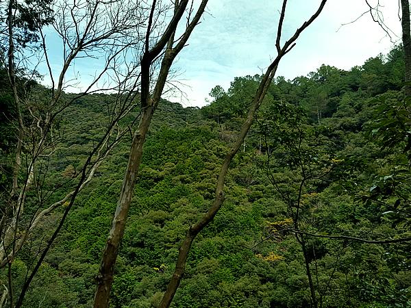 焼坂の山(久礼側)