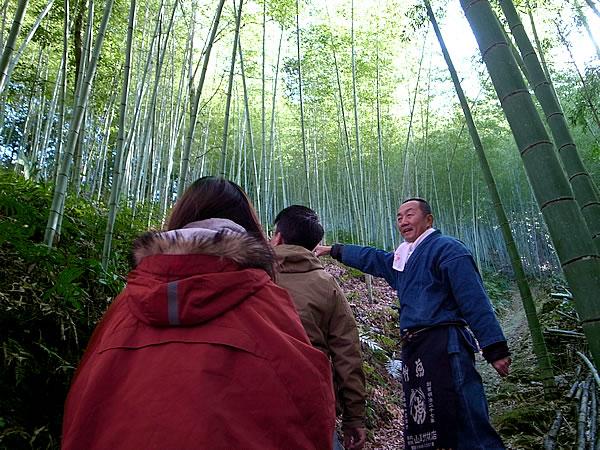 虎竹の竹林Tiger Bamboo
