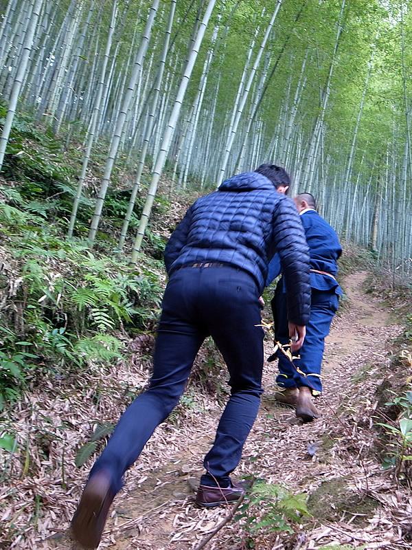 竹林への道(Tiger Bamboo)