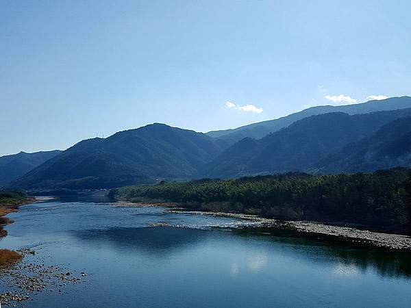 吉野川の防災竹林