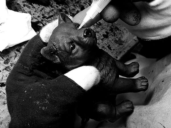 竹炭ペット(Bamboo charcoal Pet)