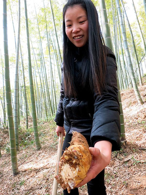 安吉の竹林での筍