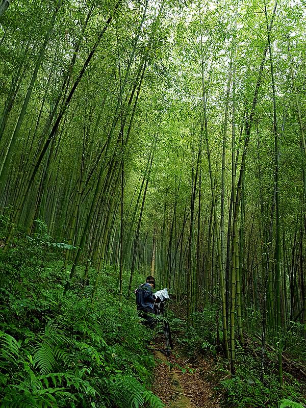 日本唯一の虎竹の里