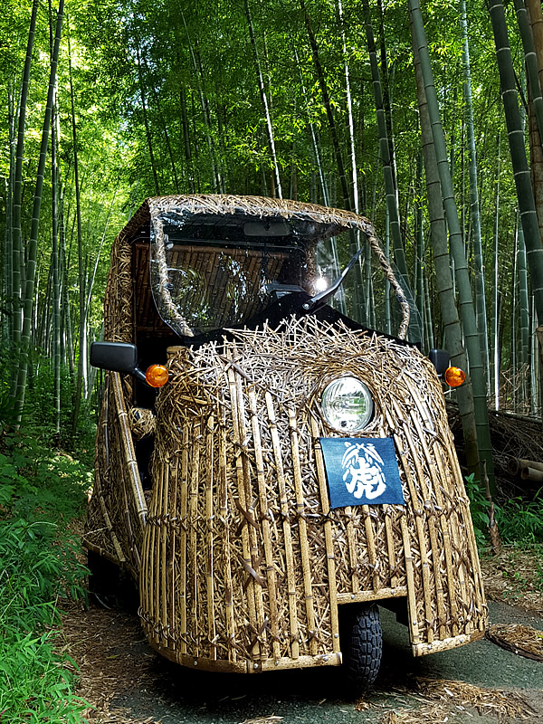 日本唯一虎斑竹(Tiger Bamboo)、竹トラッカー