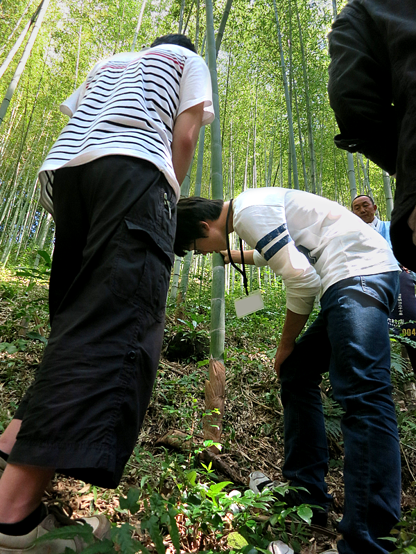 竹虎インターンシップ2016、竹林見学