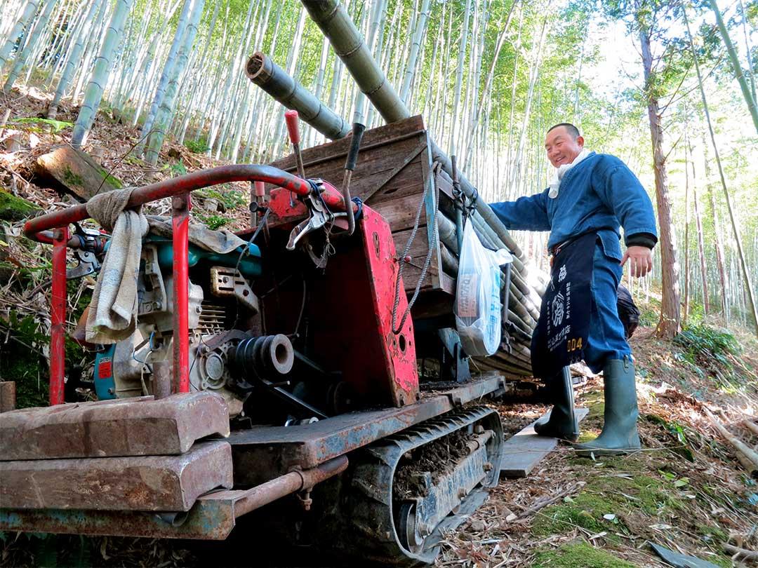 虎竹の里、虎竹(Tiger Bamboo)