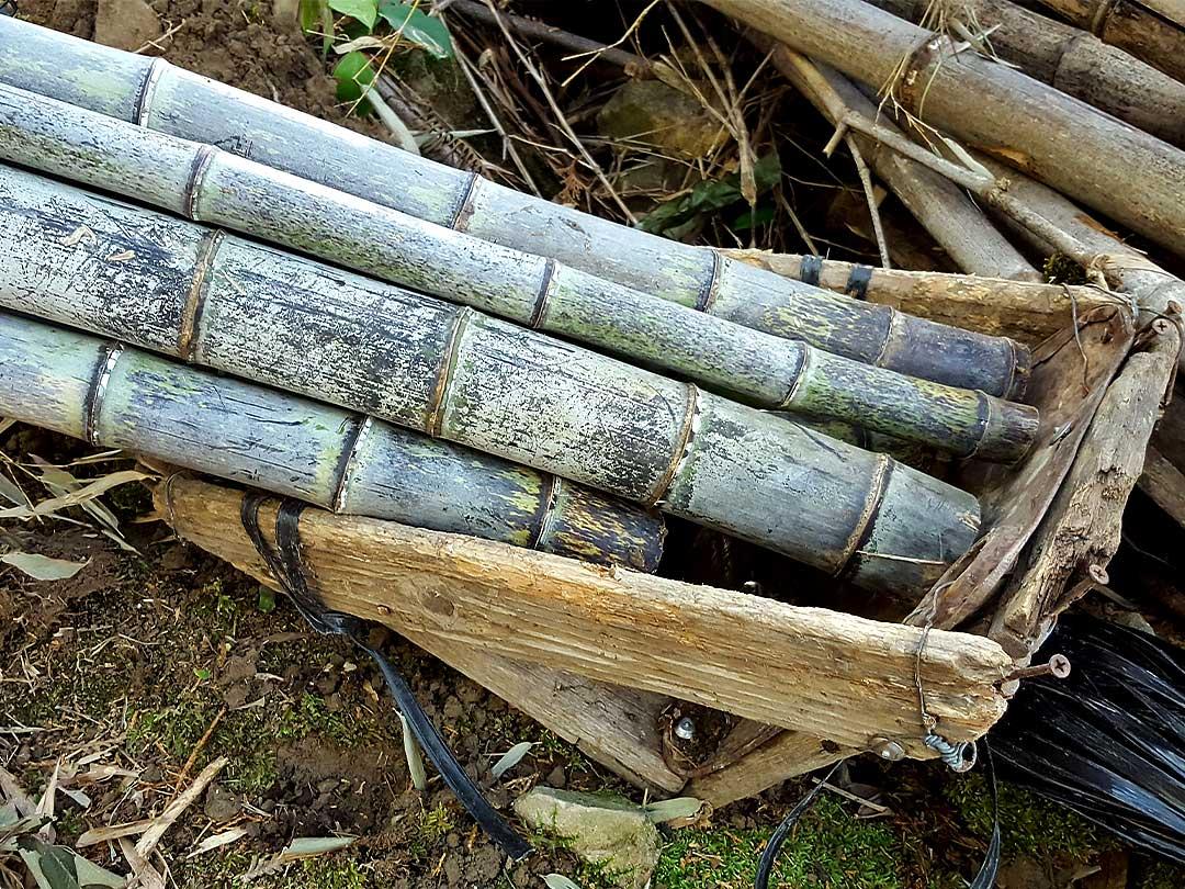 日本唯一の竹林での伐採作業