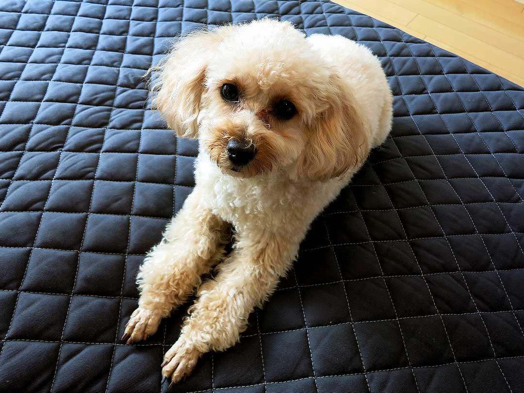 竹炭敷きパッド、愛犬