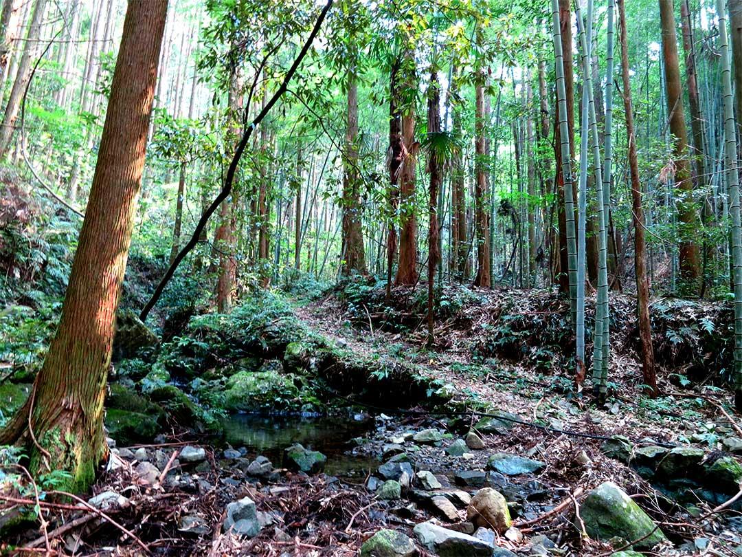 TOKIOの森