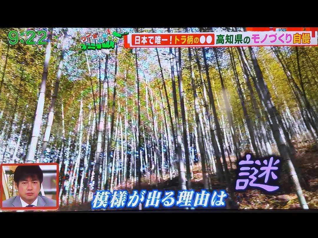 テレビ朝日「羽鳥慎一モーニングショー」放映後、虎竹の里