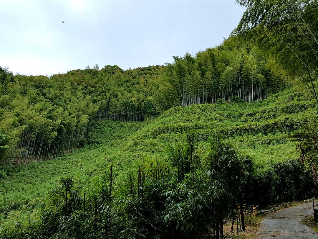第58回全国竹の大会、高知県大会準備、白木谷