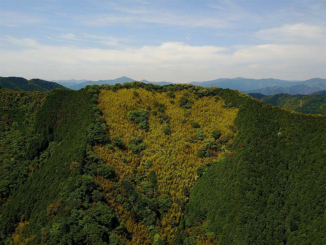 虎竹の里の虎竹林
