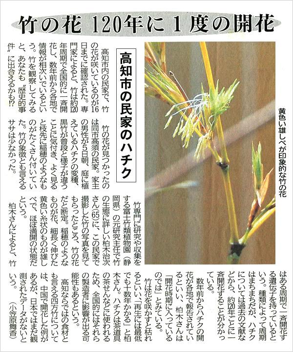 高知新聞、竹の花