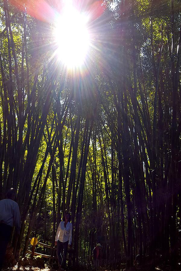 ブラジルJatobas竹農場の不思議