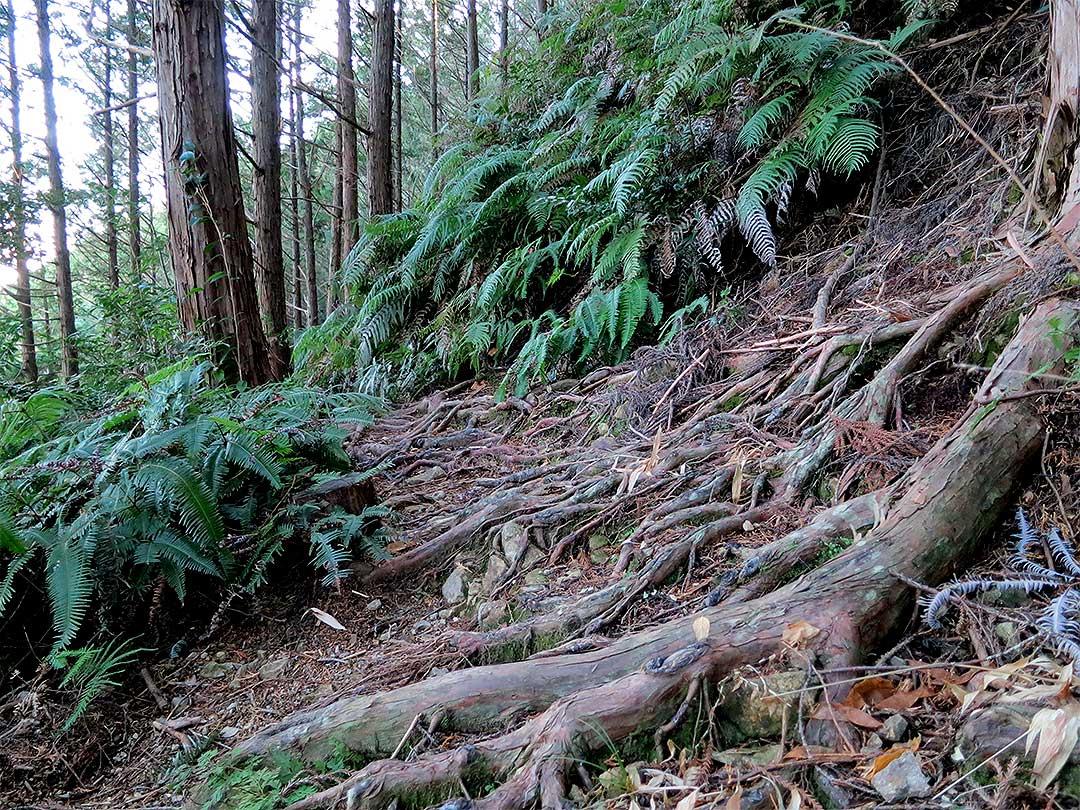 虎竹の里の遍路道