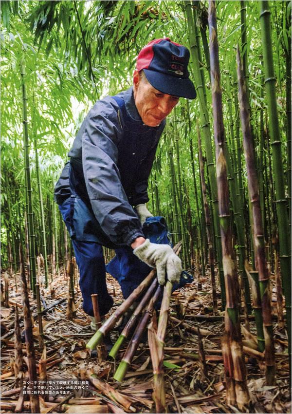 四方竹収穫